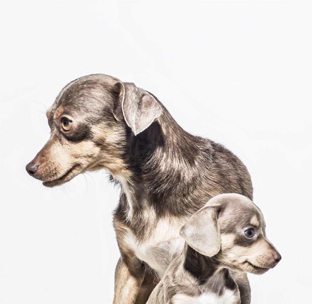 Christopher Nelson Photography | Animals | Dogs&Cats | Amanda Foundation | Saatchi&Saatchi/LA